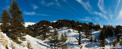 What's the deal with the Cedars of Lebanon: Rediscovering an Ancient Treasure
